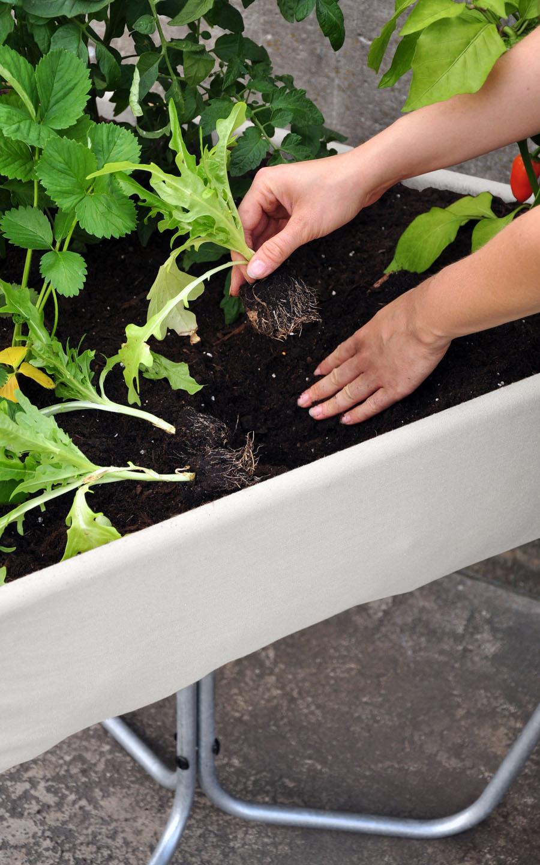 hochbeet-drebes-oertel-planting